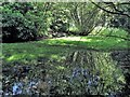 TQ6510 : The pond in Wartling Wood by Patrick Roper