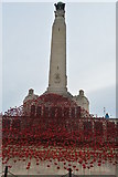 SX4753 : Naval Memorial and Poppy Wave by N Chadwick