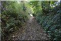 SX4657 : Ham Lane by N Chadwick