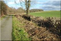 SO3459 : Noke Lane by Philip Halling