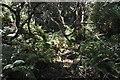 SX0349 : Woodland undergrowth by N Chadwick