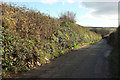 SX0572 : Lane from St Mabyn by Derek Harper