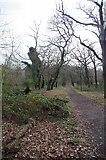 TQ3473 : Sydenham Hill Wood by Glyn Baker