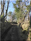 SX7483 : Hollow lane from North Bovey to Dickford Bridge by David Smith