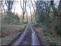 SX7582 : Private road to Foxworthy by David Smith