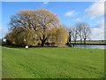 TL5065 : A fine willow at Bottisham Lock : Week 7