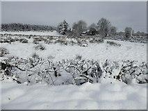 H5173 : Snow, Killycurragh by Kenneth  Allen