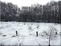 H5173 : Trees and snow, Killycurragh by Kenneth  Allen