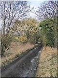 TQ2156 : Ebbisham Lane, heading north by Stefan Czapski