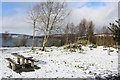 NX5576 : Picnic Area at Clatteringshaws Visitor Centre by Billy McCrorie