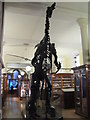 TL4558 : Iguanodon at the Sedgwick Museum by M J Richardson
