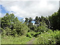 NZ1850 : Path through Langleymoor Plantation by Robert Graham