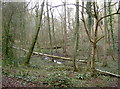 ST5373 : The stream that flows to the fish ponds by Neil Owen