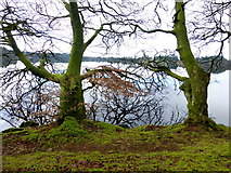 H5776 : Mossy bank and trees, Loughmacrory by Kenneth  Allen