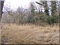 SO8992 : Baggeridge Reeds by Gordon Griffiths