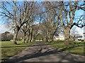 SZ1592 : Christchurch: avenue of trees across Barrack Road rec by Chris Downer