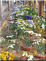 NT2475 : Spring colour at the Royal Botanic Garden Edinburgh by M J Richardson