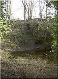 ST6470 : Pond in Bickley Wood by Neil Owen