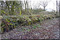 NY3860 : Parkhouse Halt - remains of platform by Rose and Trev Clough