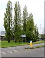 ST2995 : Roadside poplars, Southville, Cwmbran by Jaggery