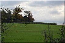 TL5053 : Copley Hill by N Chadwick