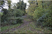TL5053 : Byway to Wandlebury Hill by N Chadwick