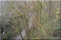SX4975 : Track below Wilminestone viaduct by N Chadwick