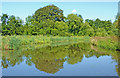SJ9822 : Canal south-east of Tixall in Staffordshire by Roger  Kidd