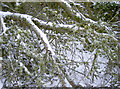 ST6268 : Snow and lichen by Neil Owen