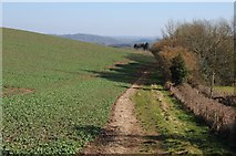 SO6756 : Footpath on the Brockhampton Estate by Philip Halling