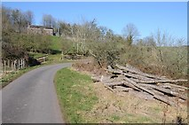 SO6756 : A timber stack beside the road to Hill House Farm by Philip Halling