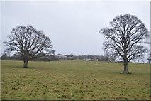 SX9986 : East Devon pasture by N Chadwick