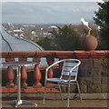 ST3087 : View from the Pavilion, Belle Vue Park, Newport by Robin Drayton