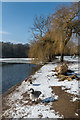 TQ2449 : Priory Pond by Ian Capper