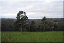 SX4970 : Tree near Higher Grenofen by N Chadwick