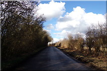 TL1320 : Chiltern Green Road, Chiltern Green by Adrian Cable