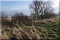 TA0508 : Viking Way near Whitehall Farm by Ian S