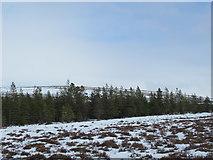 NC4725 : Forest edge west of Cnoc a' Mhaoile Ruaidh by Fiag Bridge, Lairg by ian shiell