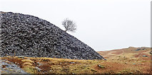 SD2895 : Tree growing from quarry spoil heap by Trevor Littlewood