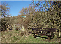 SU8599 : Seat by the Footpath by Des Blenkinsopp