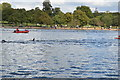 TQ2779 : Openwater swimmers, The Serpentine by N Chadwick
