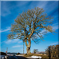 NT9603 : Tree above Sharperton by Peter Moore