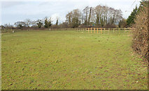 ST6267 : Pasture near Mannings Mead by Derek Harper