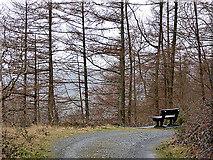 SN7079 : A bench seat in Coed Dôl-fawr by John Lucas