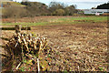 SX8866 : Coppicing at Edginswell by Derek Harper