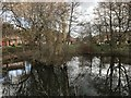SJ7745 : Pond on New Road, Madeley by Jonathan Hutchins
