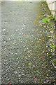 SX9165 : Motley litter, Torquay by Derek Harper