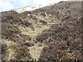 NH1523 : Fibre-optic in the hielans - Glen Affric on Facebook by ian shiell