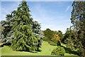 ST3708 : Cricket St Thomas: Garden by Mr Eugene Birchall