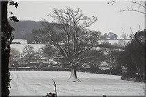 SS9712 : Mid Devon : Grassy Field by Lewis Clarke